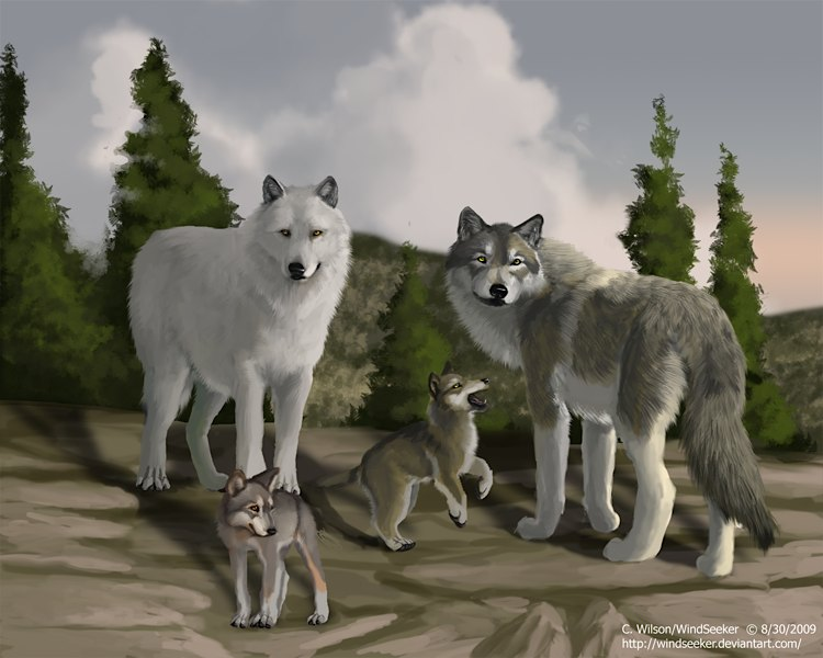 Wolfquest art contest winners the pack ccuart Choice Image