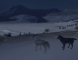 download wolfquest 2.5 survival of the pack deluxe