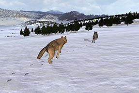 Wolfquest crossing snow ccuart Choice Image