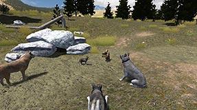 Wolfquest den ccuart Choice Image